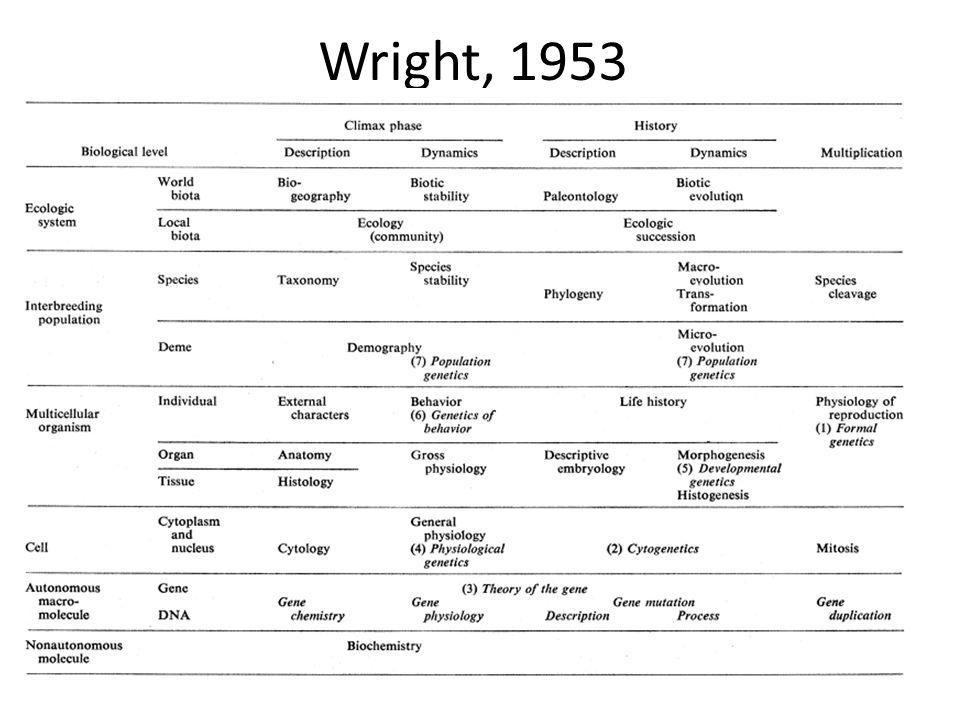Wright, 1953