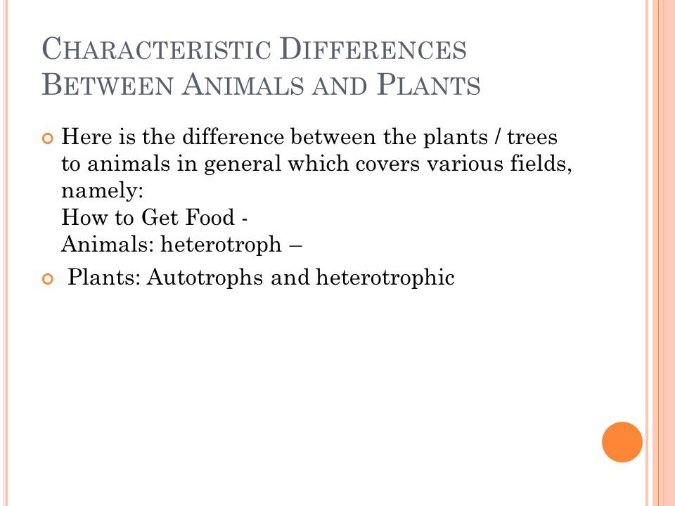 C HARACTERISTIC D IFFERENCES B ETWEEN A NIMALS AND P LANTS Here is the difference between the plants / trees to animals in general which covers various fields, namely: How to Get Food - Animals: heterotroph – Plants: Autotrophs and heterotrophic