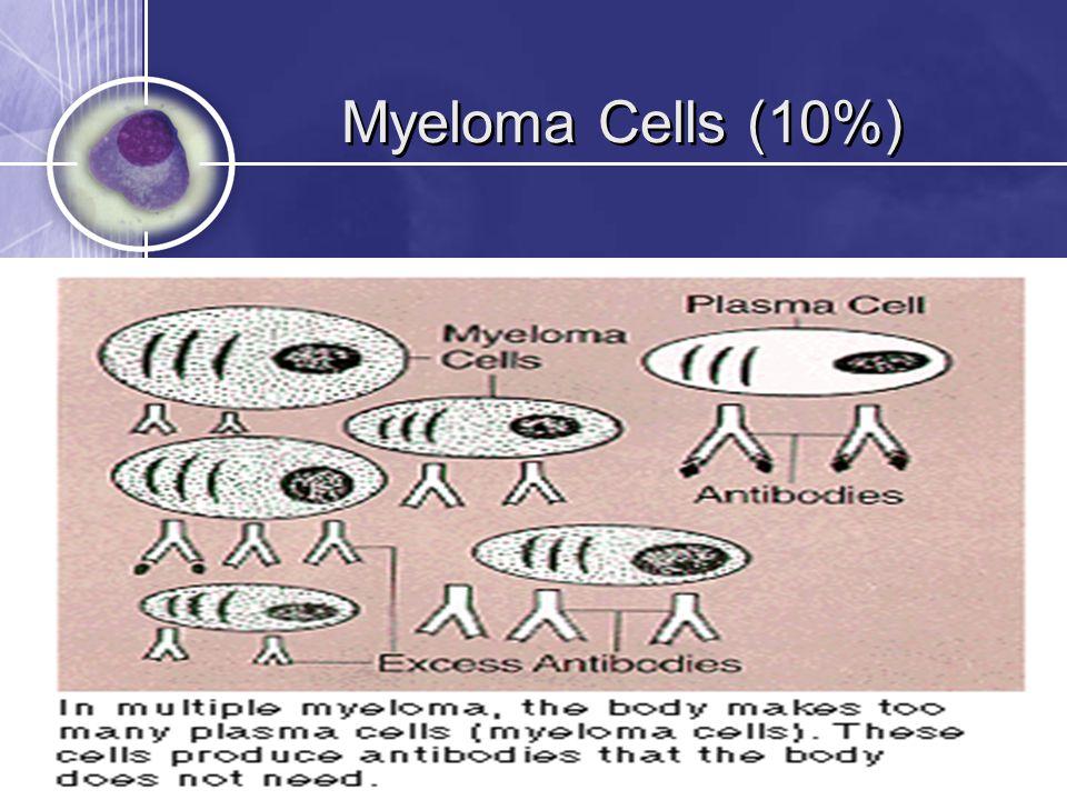 Myeloma Cells (10%)