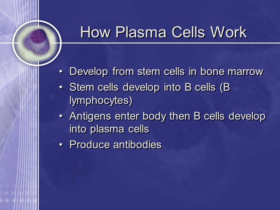 How Plasma Cells Work Develop from stem cells in bone marrow Stem cells develop into B cells (B lymphocytes) Antigens enter body then B cells develop into plasma cells Produce antibodies Develop from stem cells in bone marrow Stem cells develop into B cells (B lymphocytes) Antigens enter body then B cells develop into plasma cells Produce antibodies