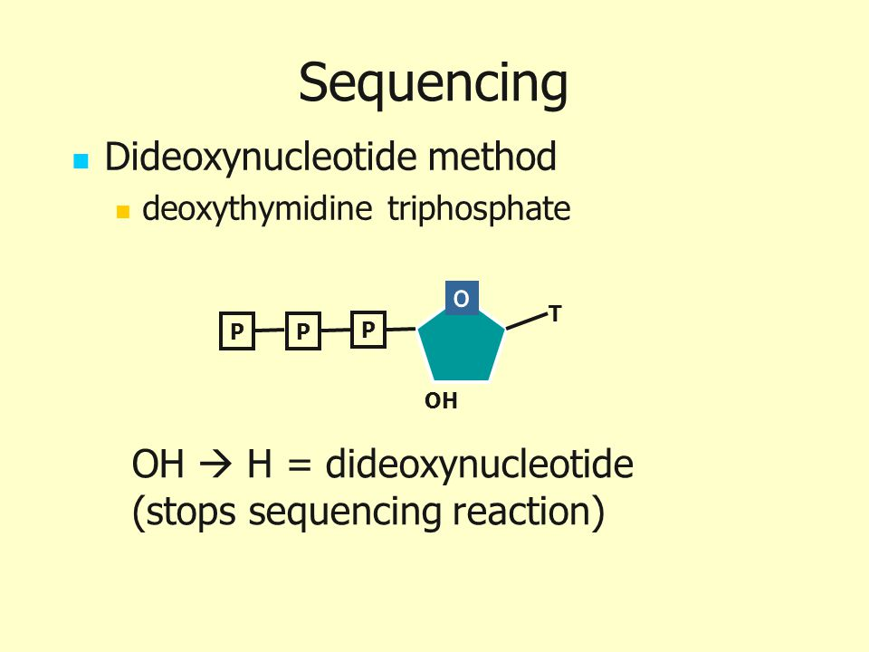 Sequencing Dideoxynucleotide method deoxythymidine triphosphate P PP OH T OH  H = dideoxynucleotide (stops sequencing reaction)