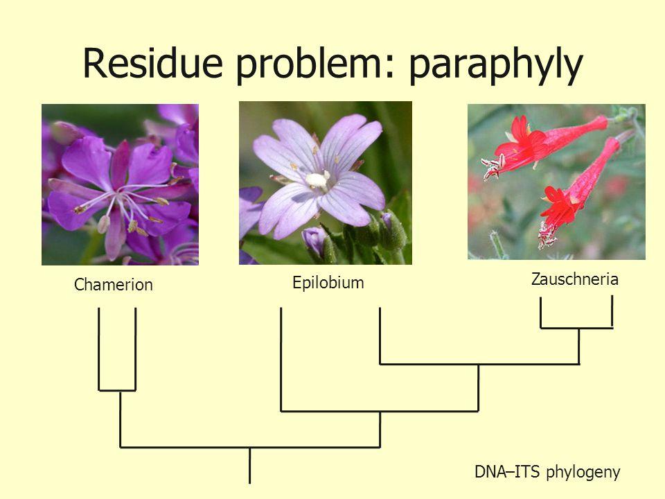 Residue problem: paraphyly Chamerion Epilobium Zauschneria DNA–ITS phylogeny