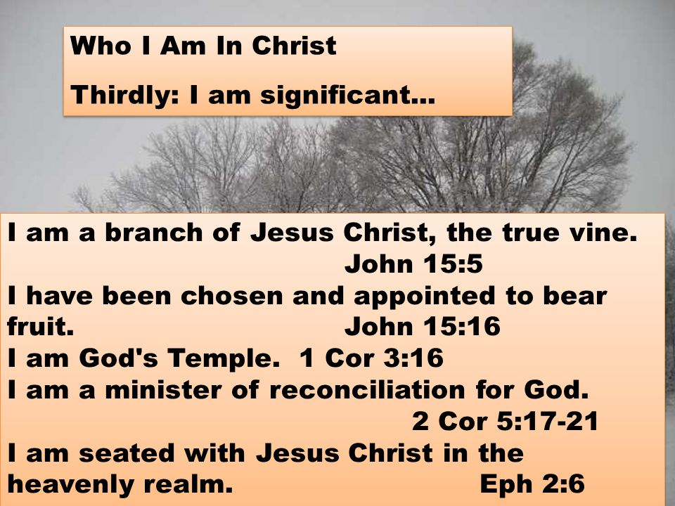 I am a branch of Jesus Christ, the true vine.