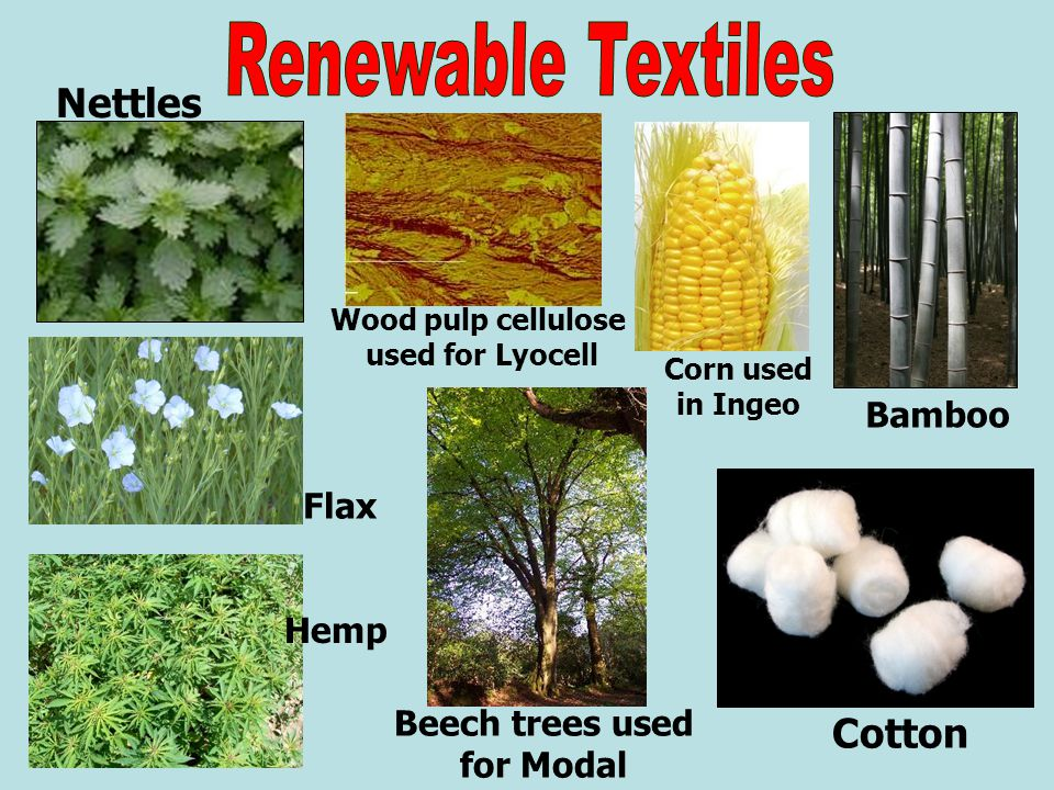 Hemp Bamboo Cotton Beech trees used for Modal Nettles Flax Wood pulp cellulose used for Lyocell Corn used in Ingeo