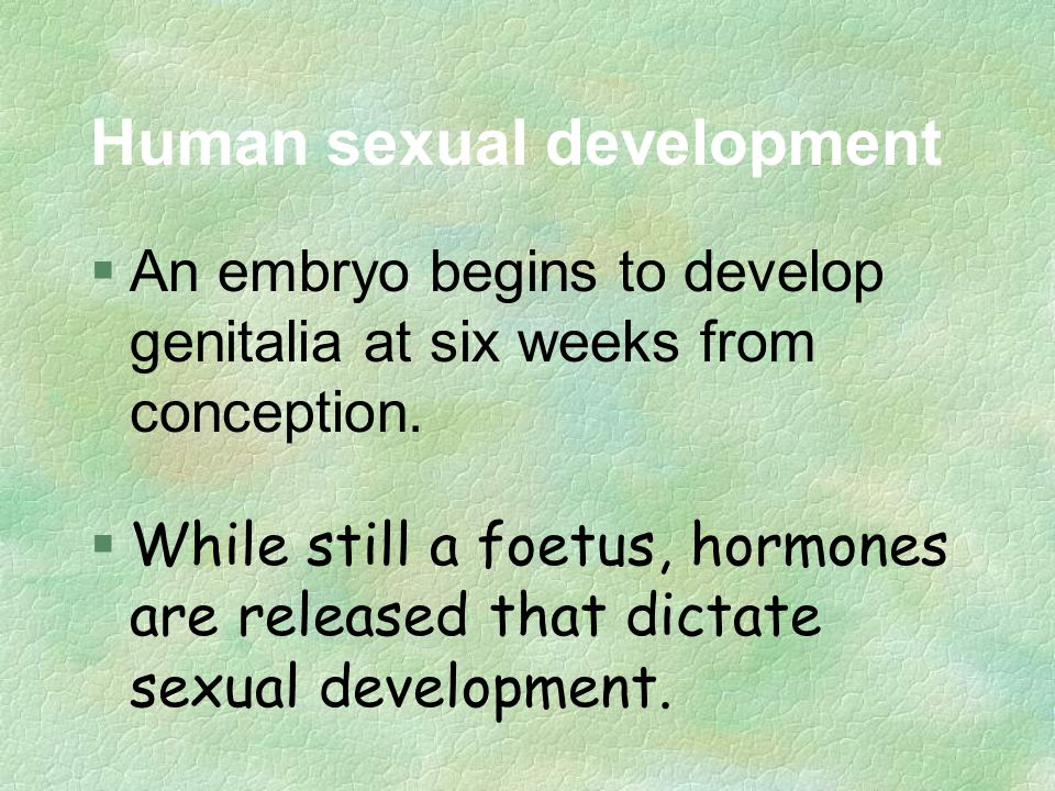 Human sexual development §An embryo begins to develop genitalia at six weeks from conception.