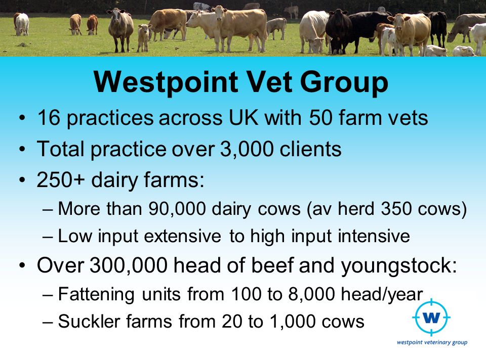 Westpoint Vet Group 16 practices across UK with 50 farm vets Total practice over 3,000 clients 250+ dairy farms: –More than 90,000 dairy cows (av herd 350 cows) –Low input extensive to high input intensive Over 300,000 head of beef and youngstock: –Fattening units from 100 to 8,000 head/year –Suckler farms from 20 to 1,000 cows