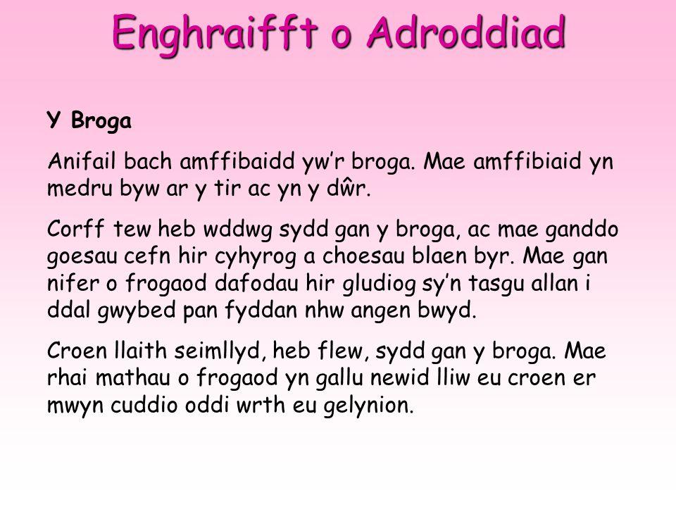 Enghraifft o Adroddiad Y Broga Anifail bach amffibaidd yw'r broga.