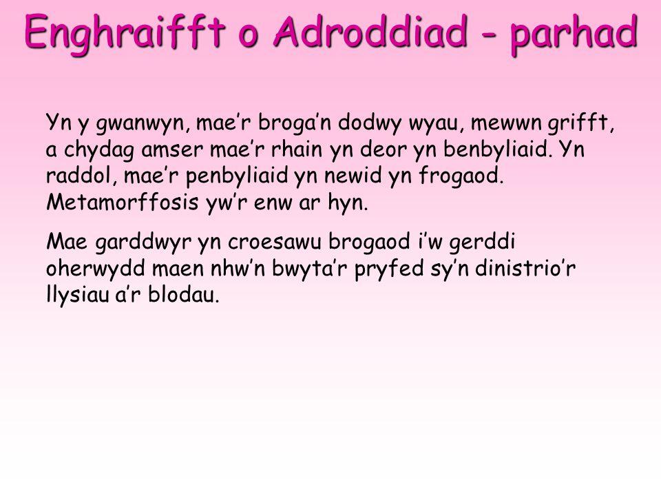 Enghraifft o Adroddiad - parhad Yn y gwanwyn, mae'r broga'n dodwy wyau, mewwn grifft, a chydag amser mae'r rhain yn deor yn benbyliaid. Yn raddol, mae