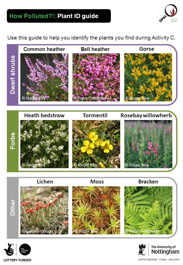 How Polluted !: Plant ID guide Use this guide to help you identify the plants you find during Activity C.