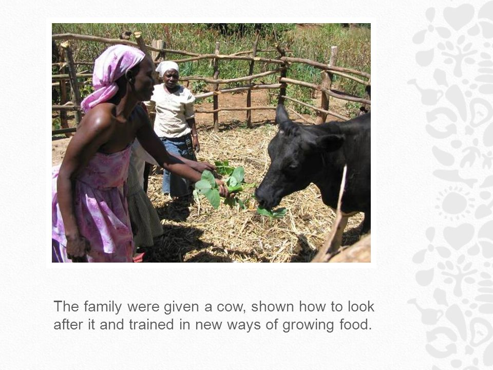 The family were given a cow, shown how to look after it and trained in new ways of growing food.