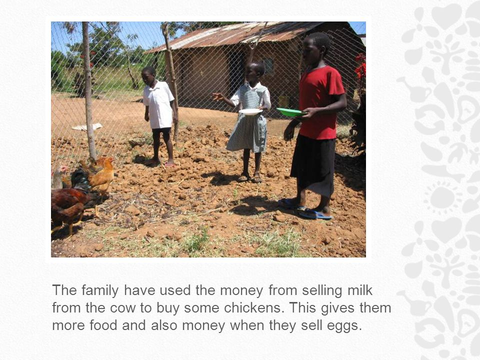 The family have used the money from selling milk from the cow to buy some chickens.