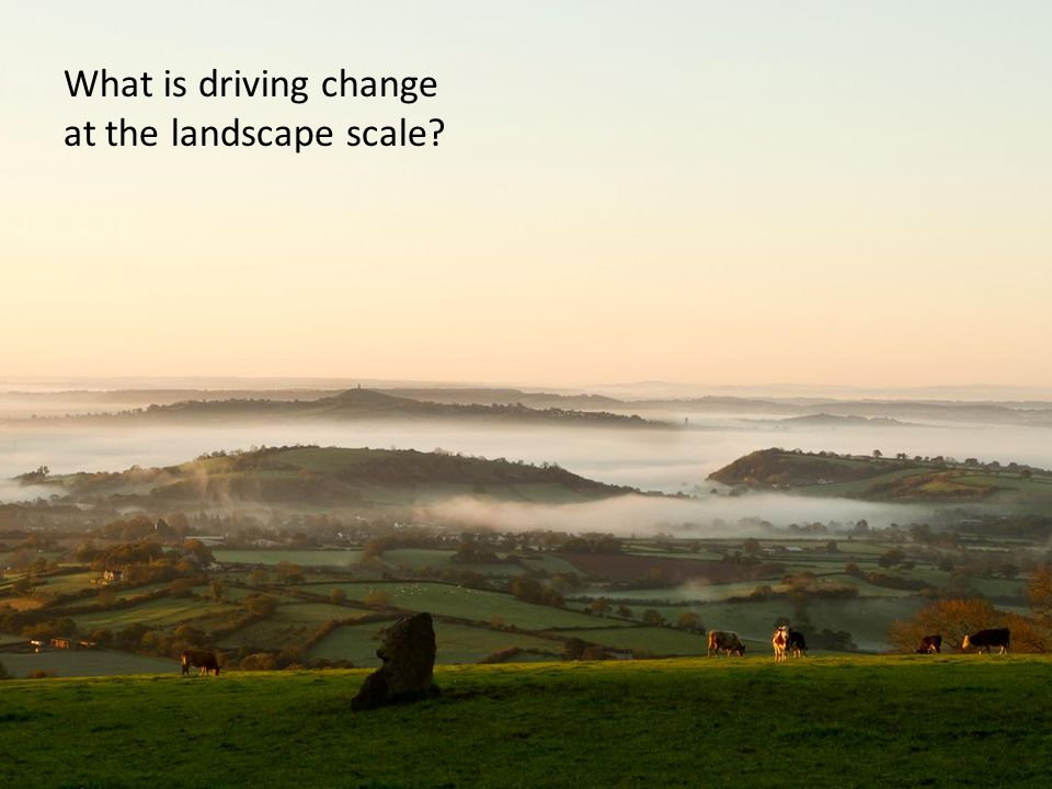 What is driving change at the landscape scale?