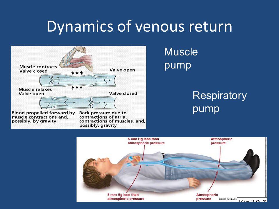 Dynamics of venous return Muscle pump Respiratory pump