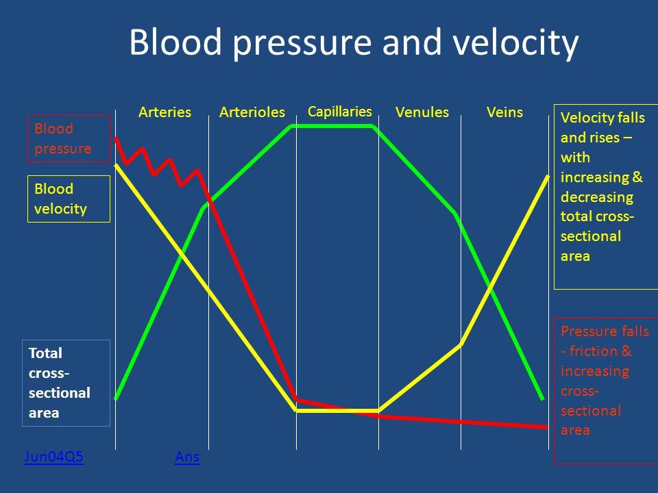 Blood pressure and velocity Total cross- sectional area ArteriesVeinsVenules Capillaries Arterioles Blood pressure Pressure falls - friction & increas