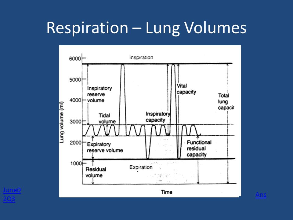 Respiration - Ventilation Ventilation = Tidal Volume x Frequency (breathing rate) Frequency/Breathing rate: Resting 12-18 min-1 Peak: 45-60 min-1 Tidal volume: Resting 0.5L Peak: 2.25 L Minute Ventilation Resting: 6 lt/min -1 Peak:175 lt/min -1