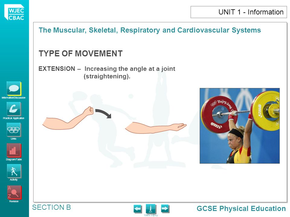 GCSE Physical Education Information/Discussion Practical Application Links Diagram/Table Activity Revision MAIN MENU The Muscular, Skeletal, Respirato
