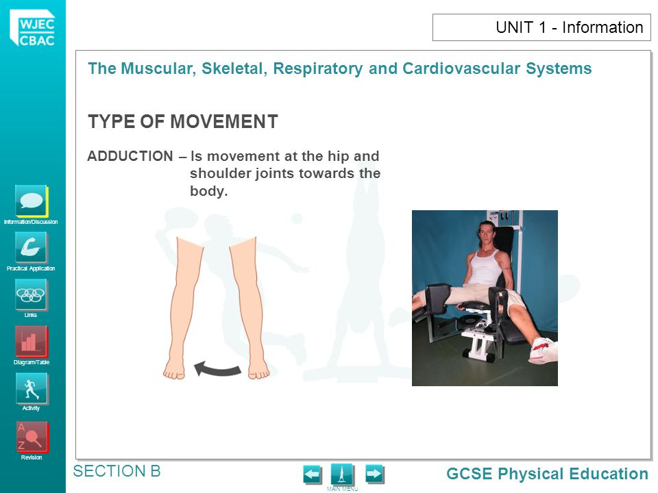 GCSE Physical Education Information/Discussion Practical Application Links Diagram/Table Activity Revision MAIN MENU The Muscular, Skeletal, Respiratory and Cardiovascular Systems SECTION B UNIT 1 - Information TYPE OF MOVEMENT ADDUCTION – Is movement at the hip and shoulder joints towards the body.