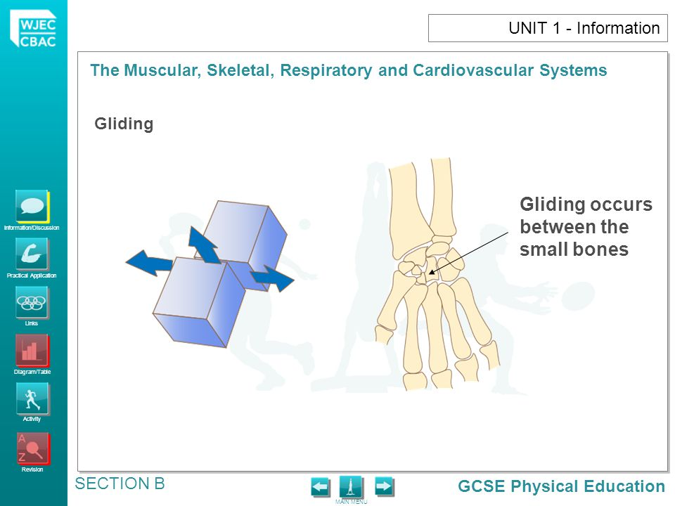 GCSE Physical Education Information/Discussion Practical Application Links Diagram/Table Activity Revision MAIN MENU The Muscular, Skeletal, Respiratory and Cardiovascular Systems SECTION B UNIT 1 - Information Gliding Gliding occurs between the small bones