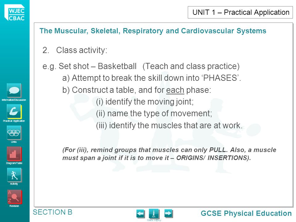 GCSE Physical Education Information/Discussion Practical Application Links Diagram/Table Activity Revision MAIN MENU The Muscular, Skeletal, Respiratory and Cardiovascular Systems SECTION B UNIT 1 – Practical Application 2.