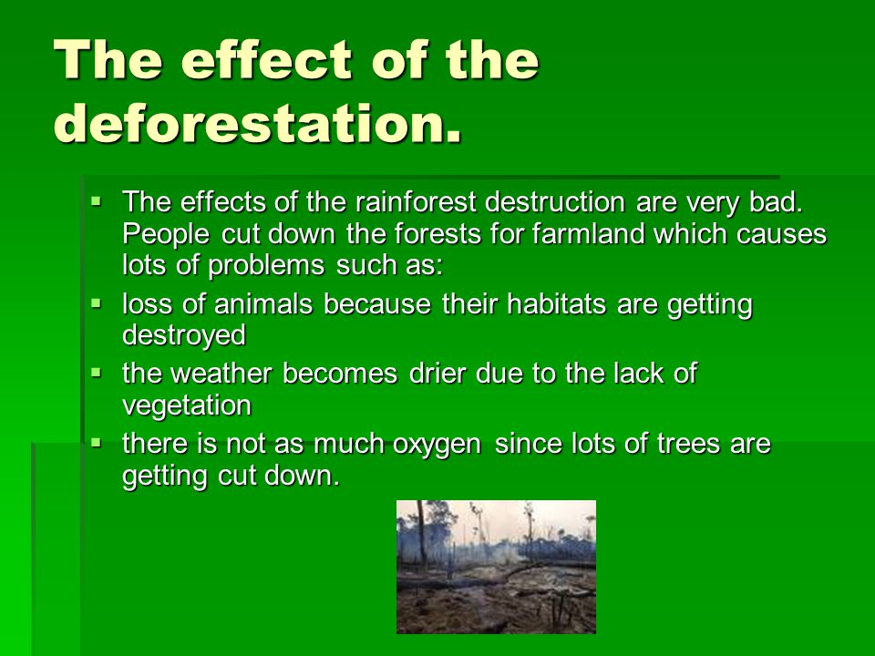 The effect of the deforestation.  The effects of the rainforest destruction are very bad.