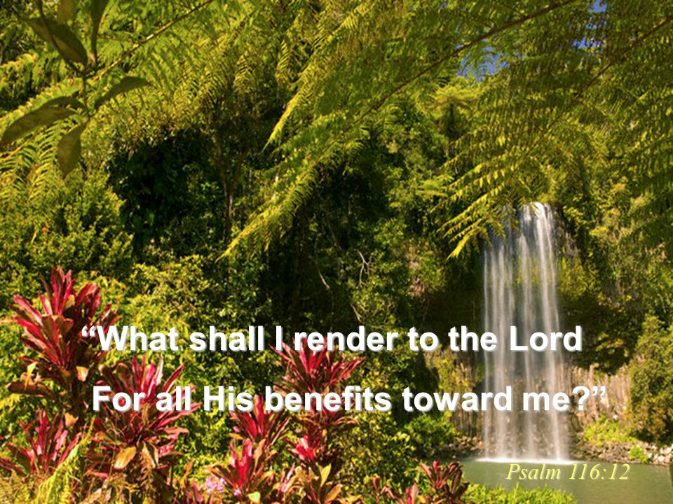 What shall I render to the Lord For all His benefits toward me? For all His benefits toward me? Psalm 116:12