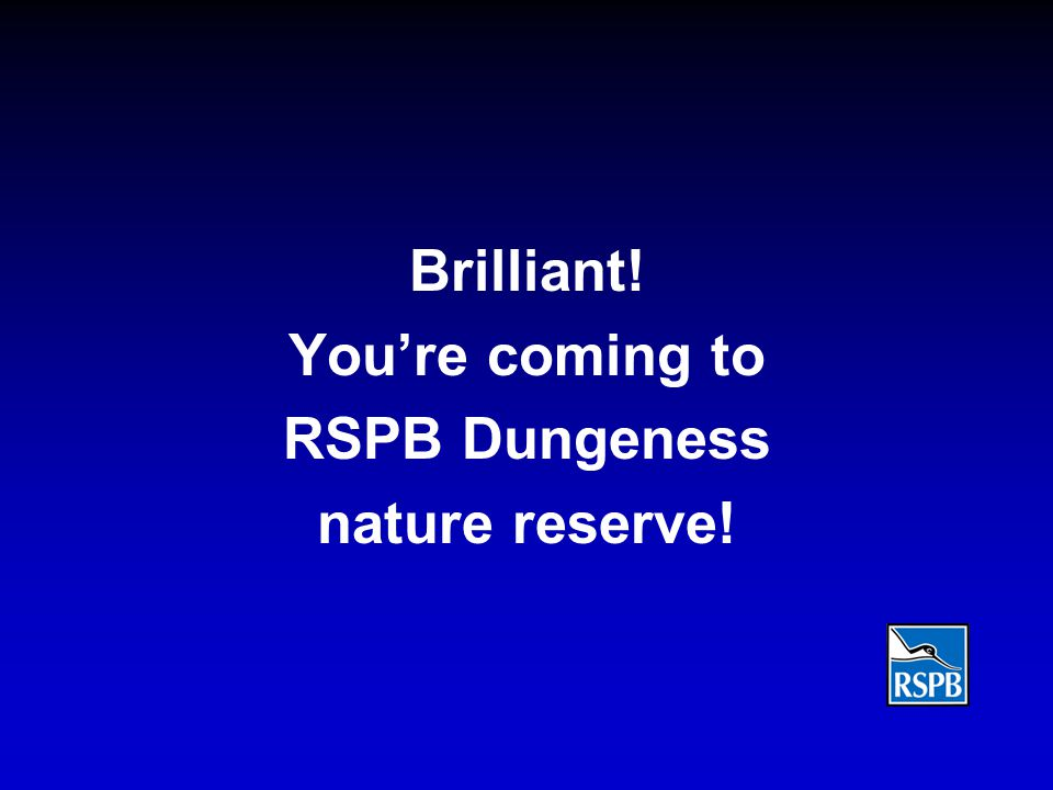 Brilliant! You're coming to RSPB Dungeness nature reserve!