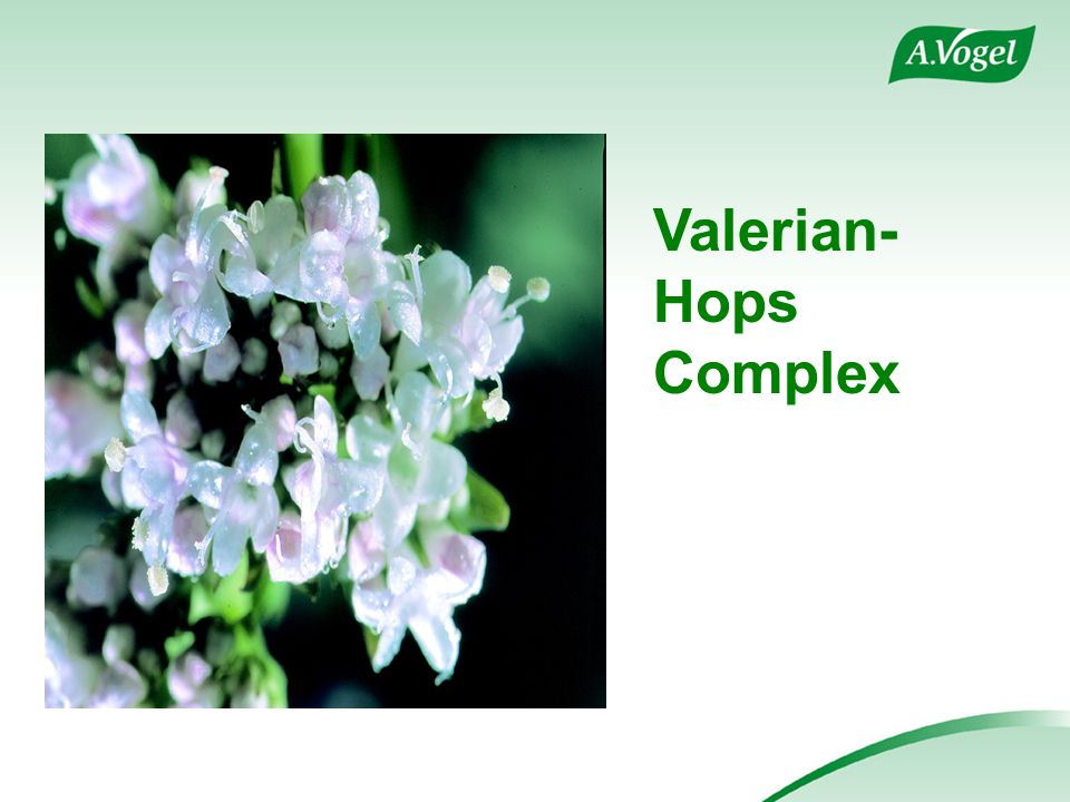 Valerian- Hops Complex