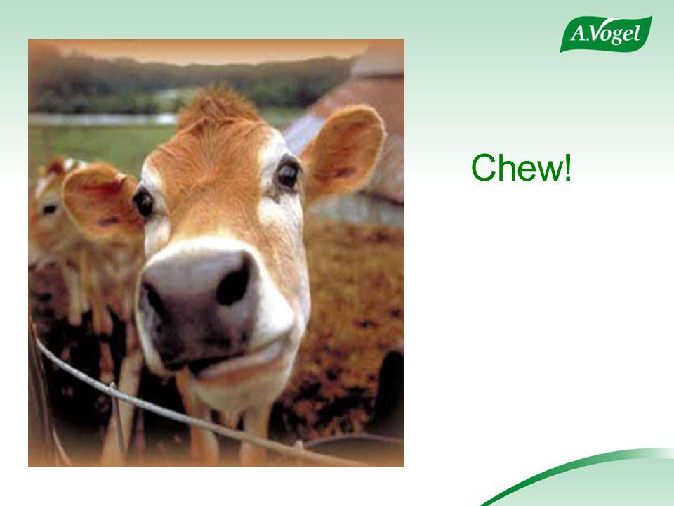 Chew!