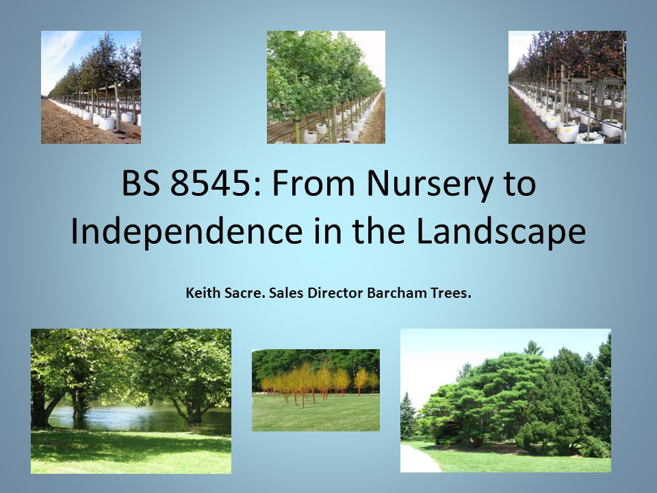 BS 8545: From Nursery to Independence in the Landscape Keith Sacre. Sales Director Barcham Trees.