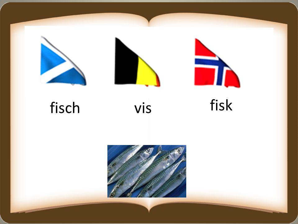fischvis fisk