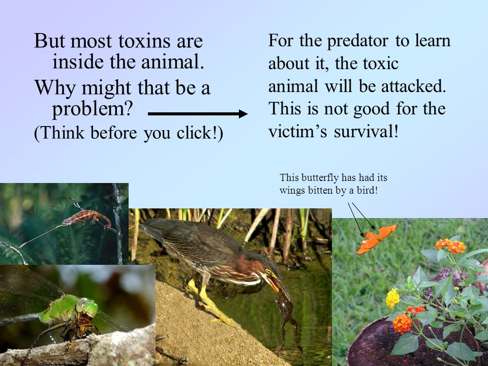 But most toxins are inside the animal.Why might that be a problem.