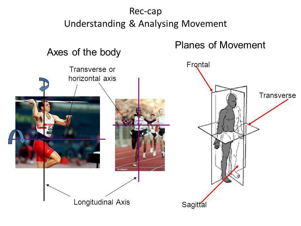 Types of Muscle Action Isotonic Isometric Constant length (no movement) Concentric (shortening under tension) Eccentric (Lengthening under tension) Isokinetic Constant speed of movement