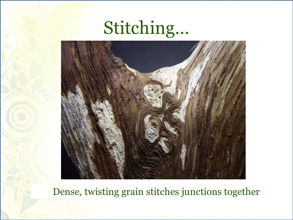 Stitching… Dense, twisting grain stitches junctions together