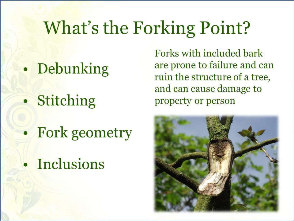 What's the Forking Point.