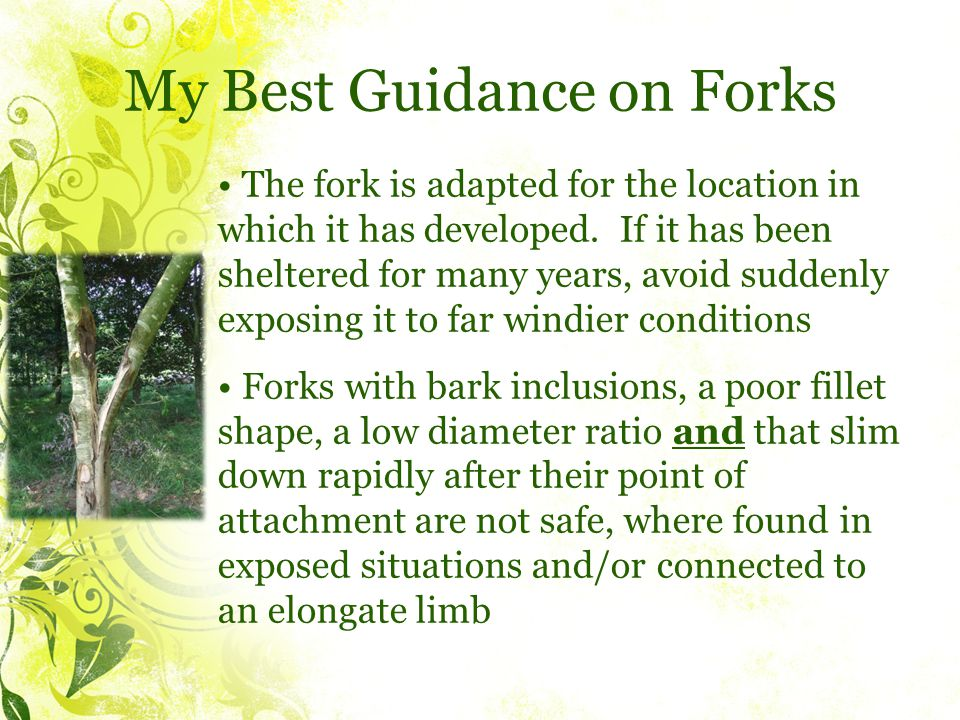 My Best Guidance on Forks The fork is adapted for the location in which it has developed.