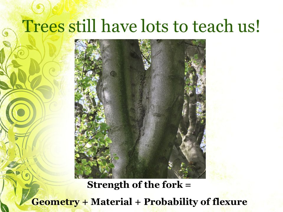 Trees still have lots to teach us.
