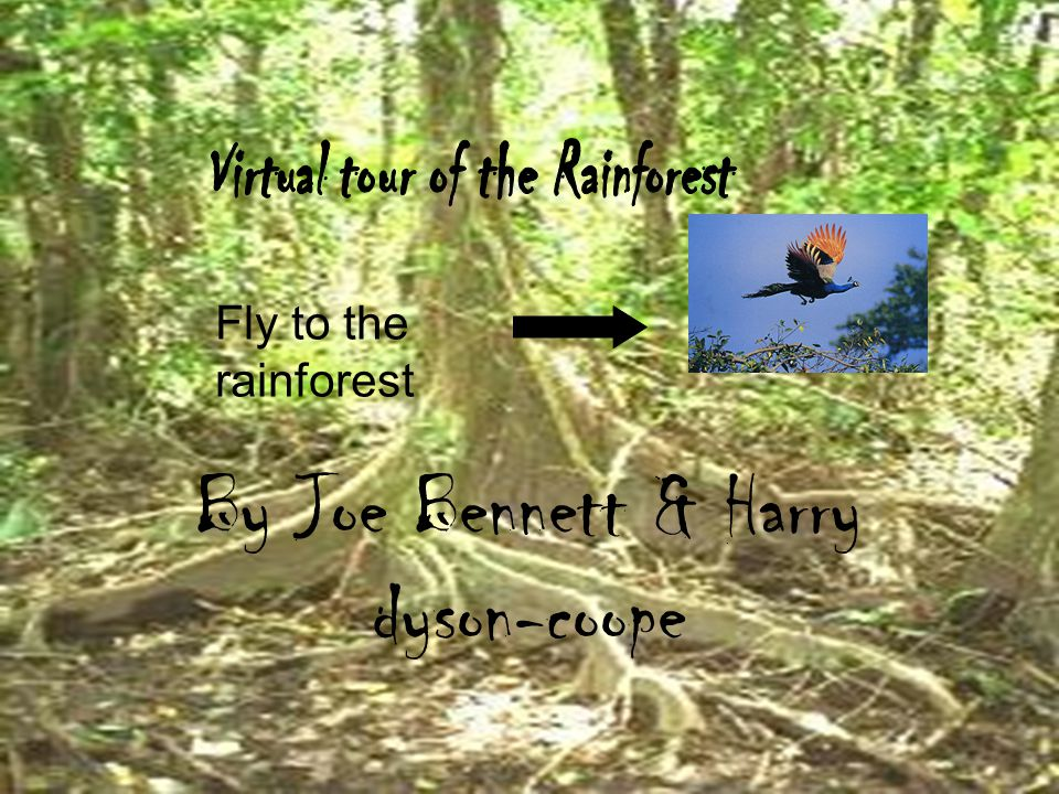 By Joe Bennett & Harry dyson-coope Fly to the rainforest