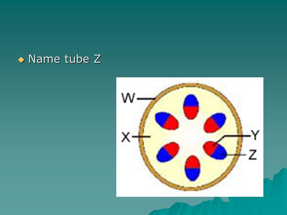  Name tube Z