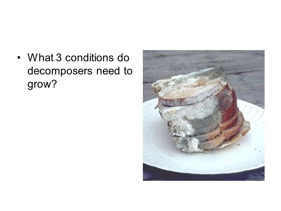 What 3 conditions do decomposers need to grow?