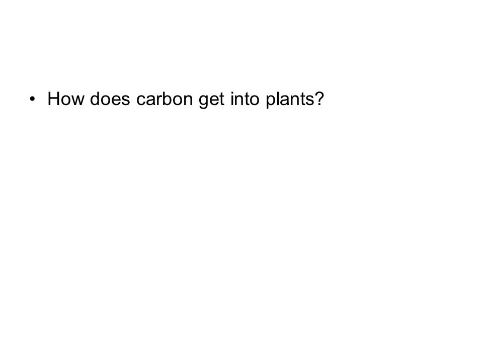 How does carbon get into plants?