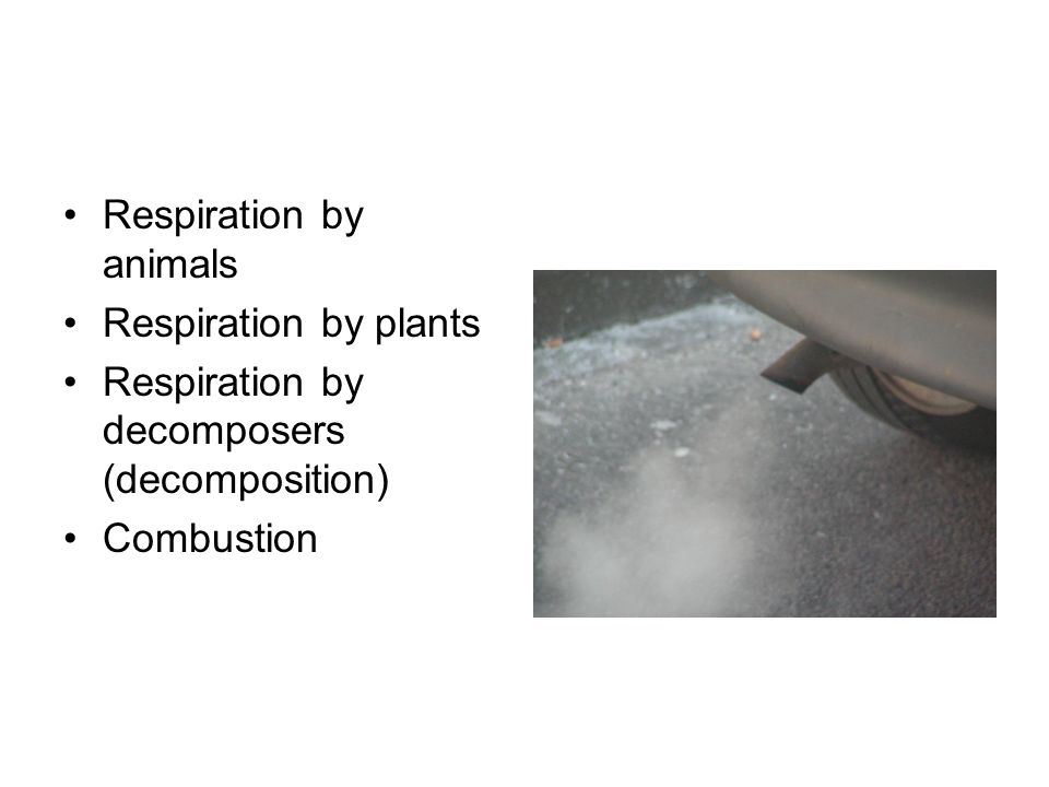 Respiration by animals Respiration by plants Respiration by decomposers (decomposition) Combustion