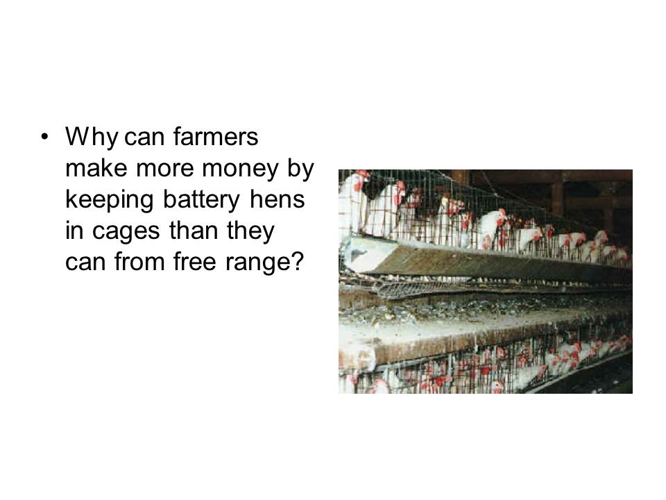 Why can farmers make more money by keeping battery hens in cages than they can from free range?