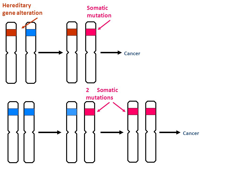 Cancer Hereditary gene alteration Somatic mutation Cancer 2 Somatic mutations