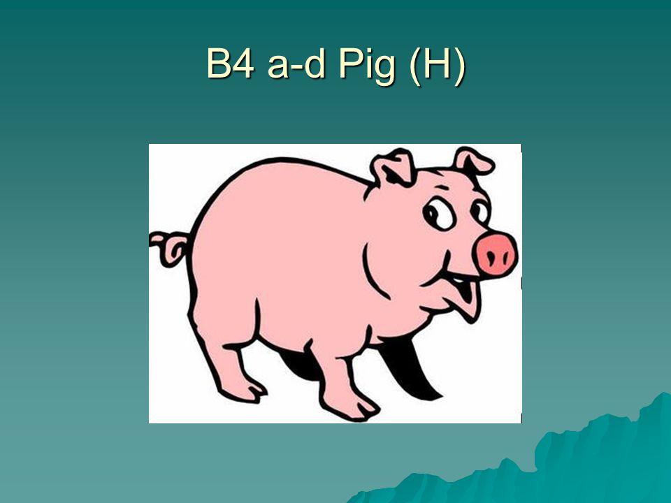 B4 a-d Pig (H)