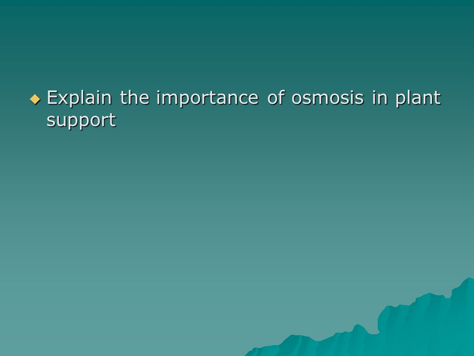  Explain the importance of osmosis in plant support