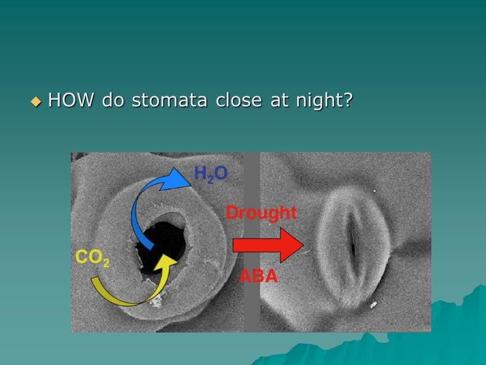  HOW do stomata close at night?