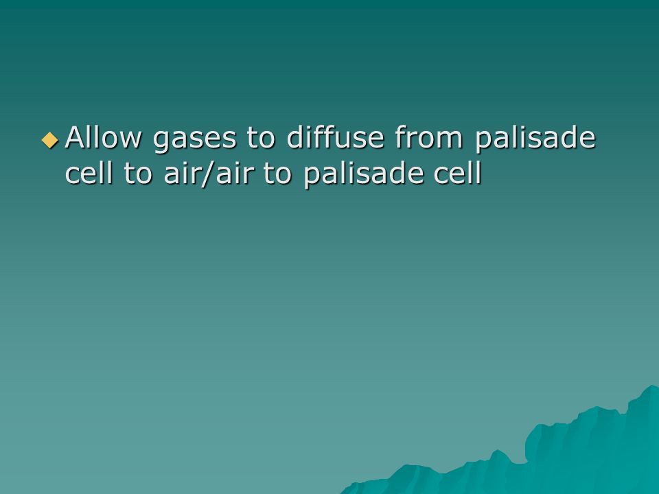  Allow gases to diffuse from palisade cell to air/air to palisade cell