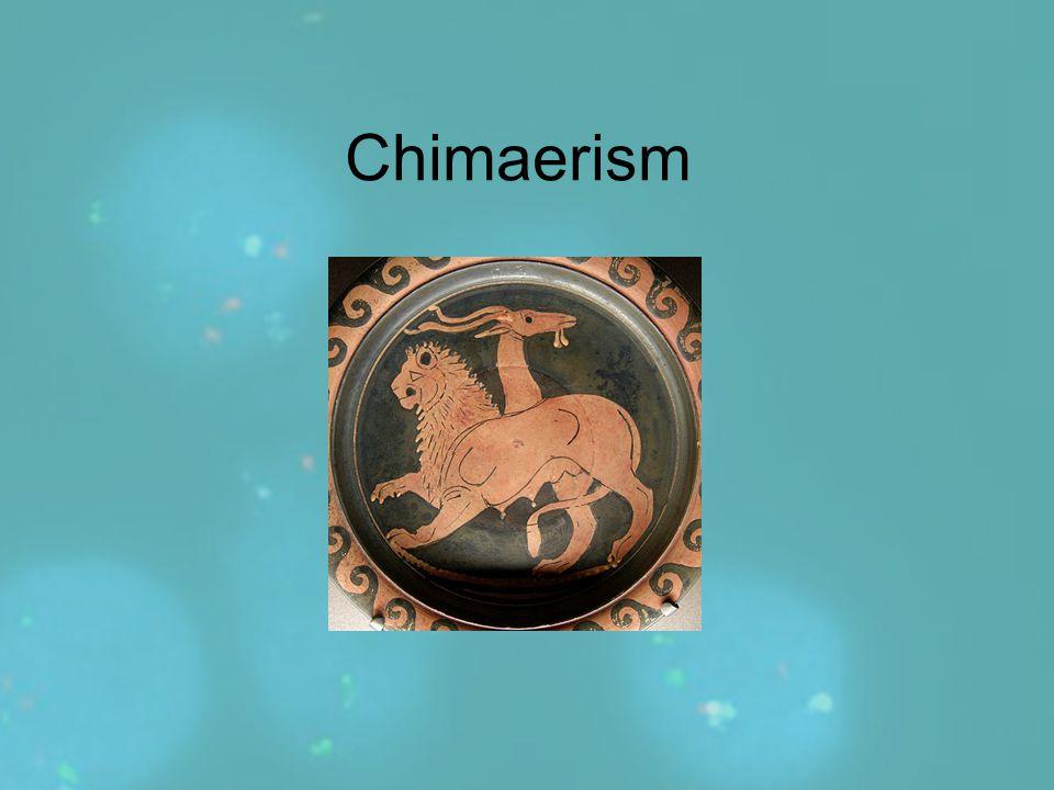 Chimaerism