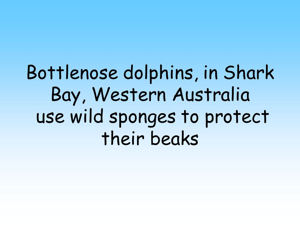 Dolphins have been observed using tools True