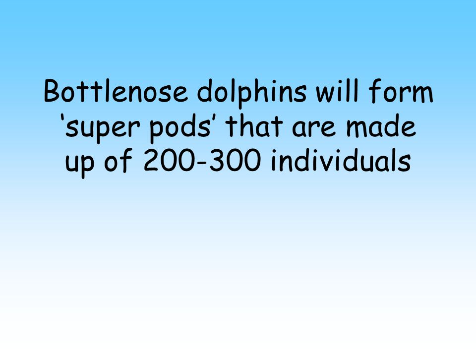 False Bottlenose dolphins live in groups of up to 50 individuals